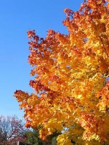 Herbstbaum 001