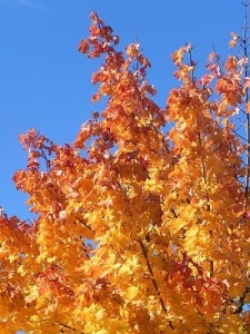 Herbstbaumt 002