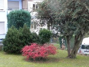 Garten 002