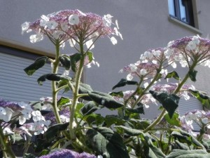 Elternhaus, durch die Blume gesehen.
