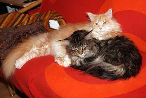 Katzen-Couch 048