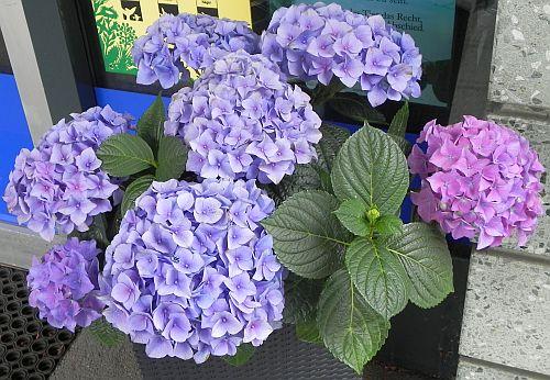 Blumenschmuck vor einem Laden in der Esslinger Straße