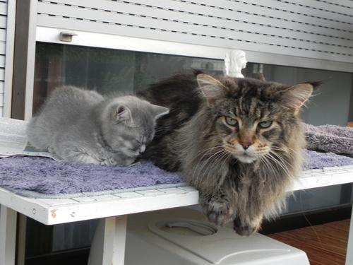 Große und kleine Katze